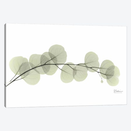 Eucalyptus 3-Piece Canvas #ALK44} by Albert Koetsier Canvas Art Print