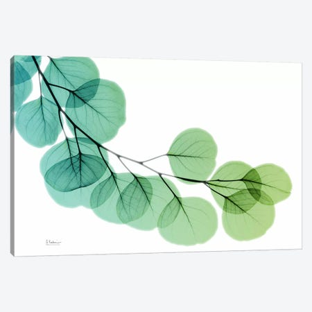 Eucalyptus Green Blue Canvas Print #ALK45} by Albert Koetsier Canvas Art Print