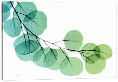 Eucalyptus Green Blue Canvas Art Print