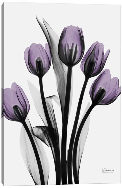 Five Tulips Canvas Art Print