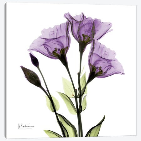 Gentian Believe Canvas Print #ALK47} by Albert Koetsier Art Print