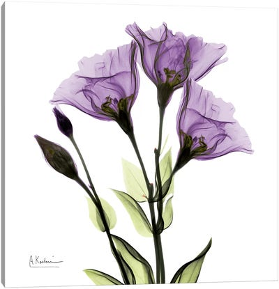 Gentian Believe Canvas Art Print