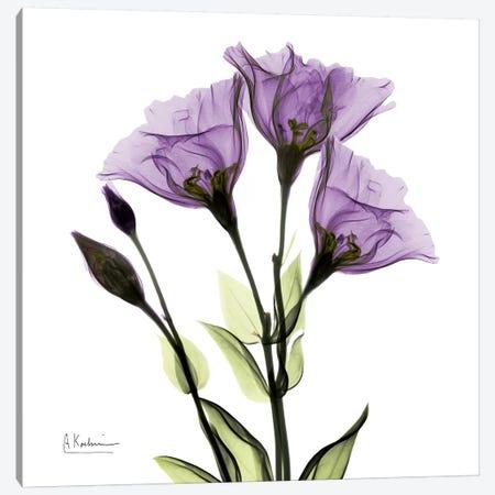 Gentian Believe Canvas Print #ALK47} by Albert Koetsier Art Print
