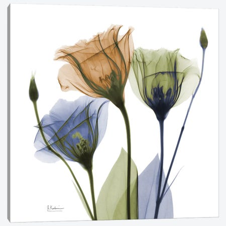 Gentian Buddies Canvas Print #ALK48} by Albert Koetsier Canvas Artwork