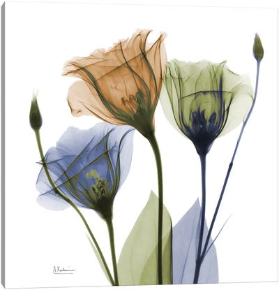 Gentian Buddies Canvas Art Print