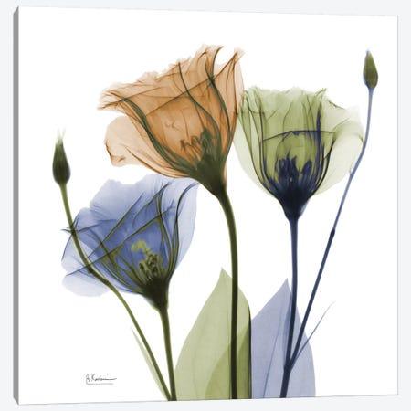 Gentian Buddies Canvas Print #ALK48} by Albert Koetsier Canvas Artwork