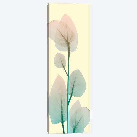 Blissful Bloom II Canvas Print #ALK4} by Albert Koetsier Canvas Artwork