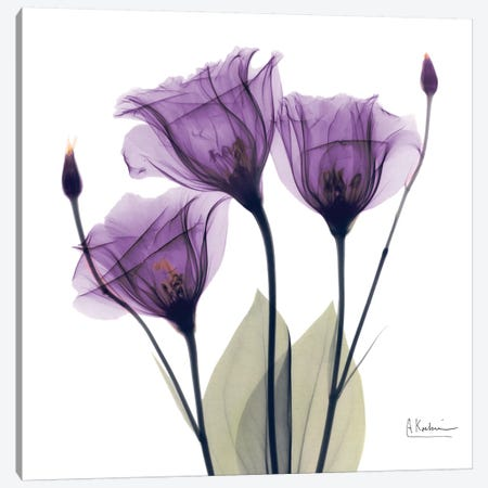 Gentian Hope Canvas Print #ALK50} by Albert Koetsier Art Print