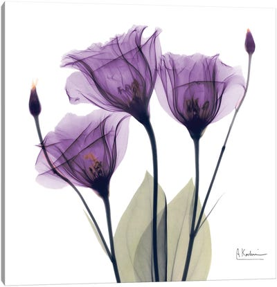 Gentian Hope Canvas Art Print