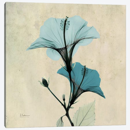 Hibiscus Blue Canvas Print #ALK51} by Albert Koetsier Art Print