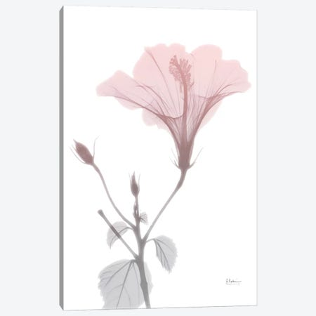 Hibiscus Pink Canvas Print #ALK52} by Albert Koetsier Canvas Art Print