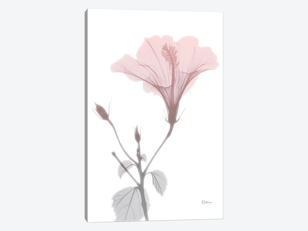 Hibiscus Pink by Albert Koetsier 1-piece Canvas Print