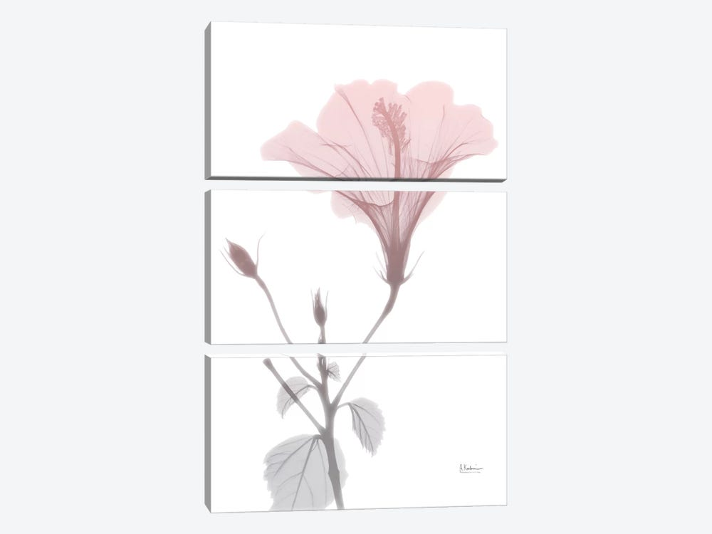 Hibiscus Pink by Albert Koetsier 3-piece Canvas Art Print