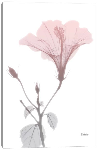 Hibiscus Pink Canvas Art Print