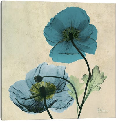 Iceland Poppy Blue Canvas Art Print