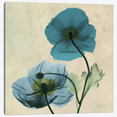 Iceland Poppy Blue 3-Piece Canvas #ALK53} by Albert Koetsier Art Print