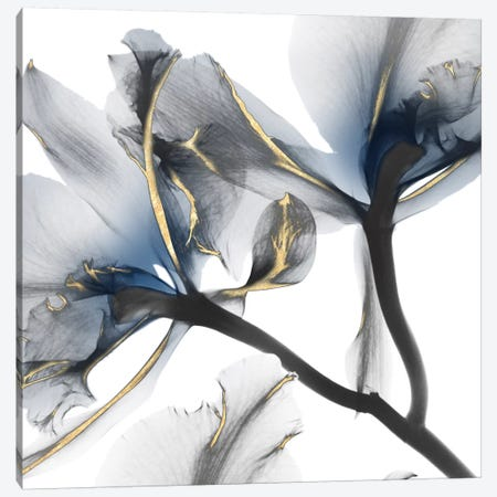 Indigo Luster Cyclamen II 3-Piece Canvas #ALK56} by Albert Koetsier Canvas Artwork