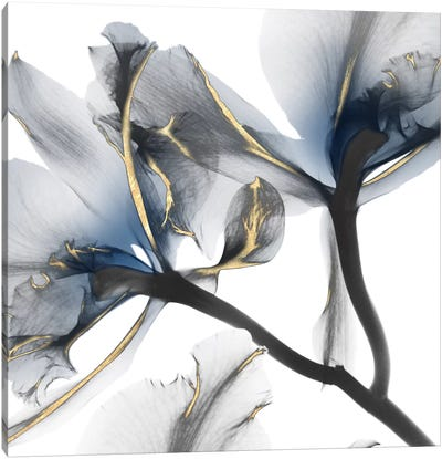 Indigo Luster Cyclamen II Canvas Art Print