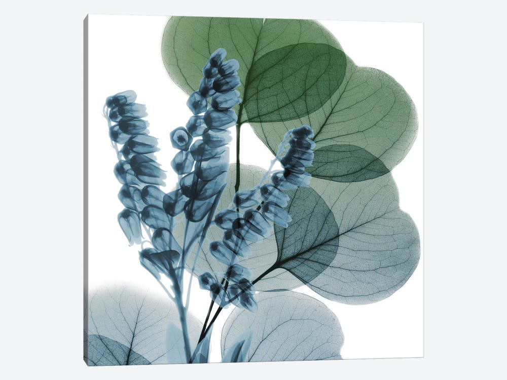 Lilly Of Eucalyptus I by Albert Koetsier 1-piece Canvas Artwork