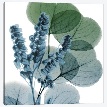 Lilly Of Eucalyptus I Canvas Print #ALK57} by Albert Koetsier Canvas Wall Art