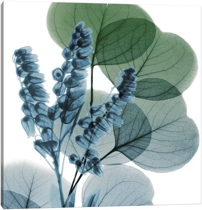 Lilly Of Eucalyptus I Canvas Art Print