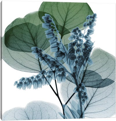 Lilly Of Eucalyptus II Canvas Art Print