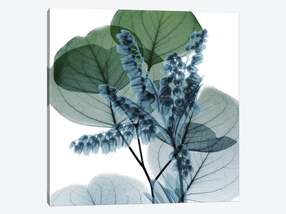 Lilly Of Eucalyptus II 1-piece Canvas Art Print