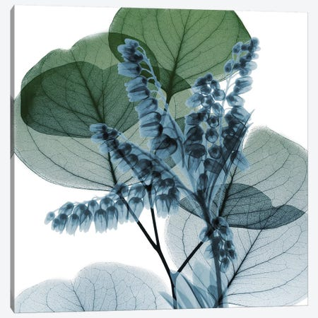 Lilly Of Eucalyptus II 3-Piece Canvas #ALK58} by Albert Koetsier Canvas Art Print