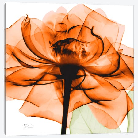 Orange Rose Canvas Print #ALK67} by Albert Koetsier Art Print