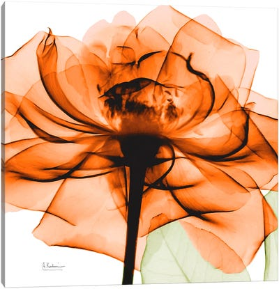 Orange Rose Canvas Art Print