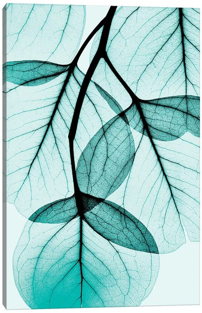 Teal Eucalyptus Canvas Art Print
