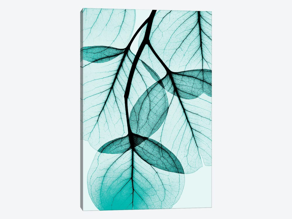 Teal Eucalyptus by Albert Koetsier 1-piece Canvas Wall Art