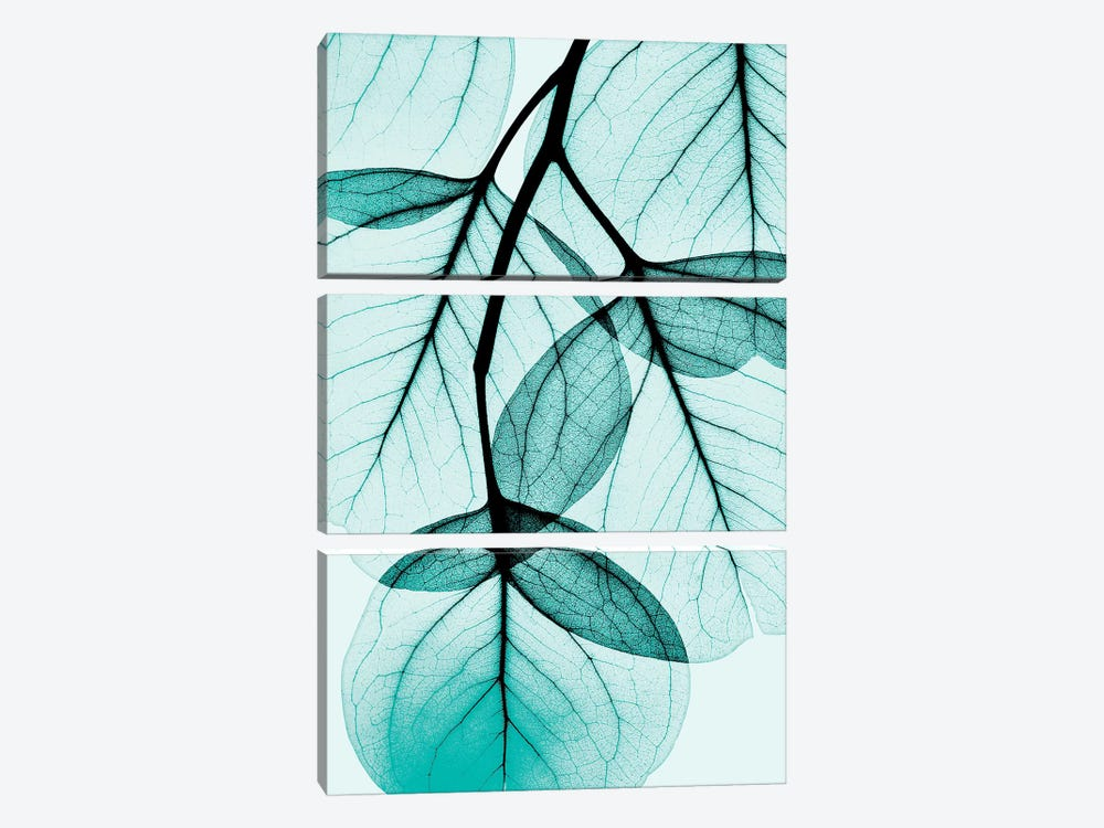 Teal Eucalyptus by Albert Koetsier 3-piece Canvas Artwork