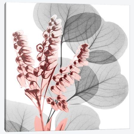 Eucalyptus Blush II Canvas Print #ALK6} by Albert Koetsier Canvas Artwork