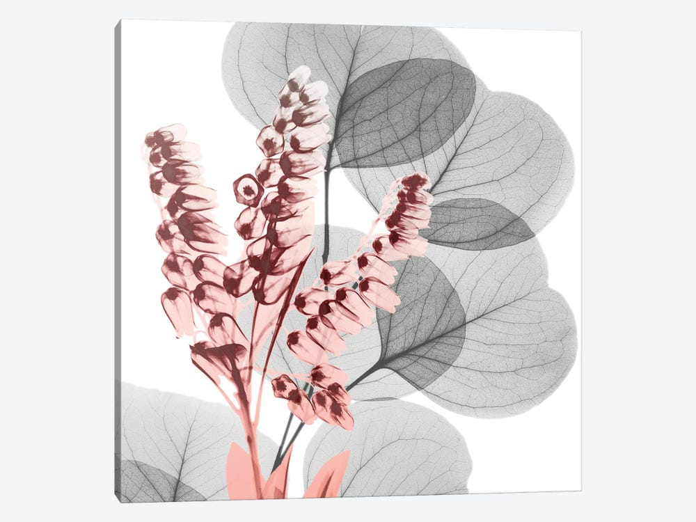 Eucalyptus Blush II 1-piece Canvas Wall Art