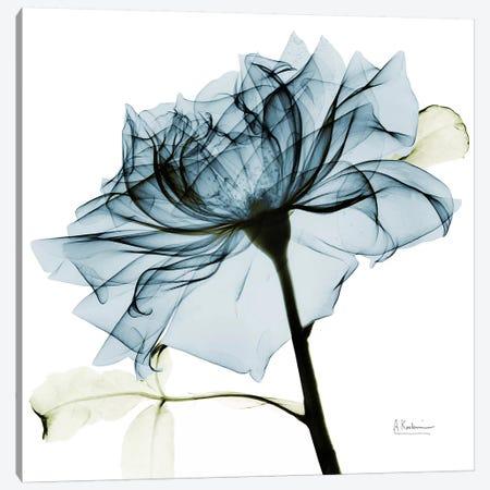 Teal Rose III Canvas Print #ALK71} by Albert Koetsier Canvas Print