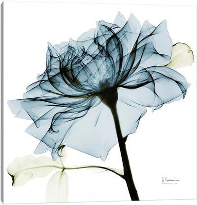 Teal Rose III Canvas Art Print