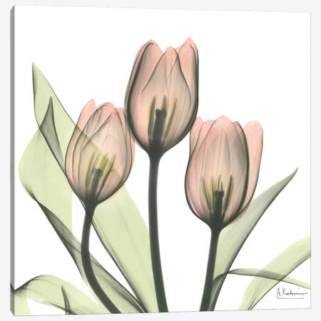 Tulips I Canvas Print #ALK73} by Albert Koetsier Canvas Print