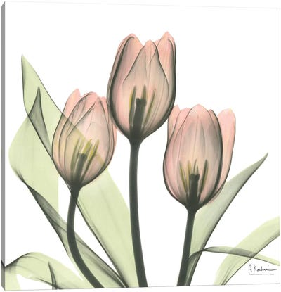 Tulips I Canvas Art Print