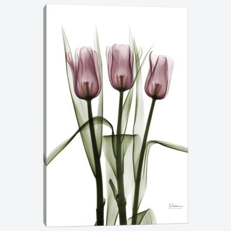Tulips II Canvas Print #ALK74} by Albert Koetsier Canvas Wall Art