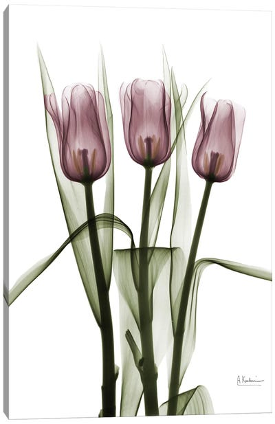 Tulips II Canvas Art Print