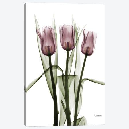Tulips II 3-Piece Canvas #ALK74} by Albert Koetsier Canvas Wall Art