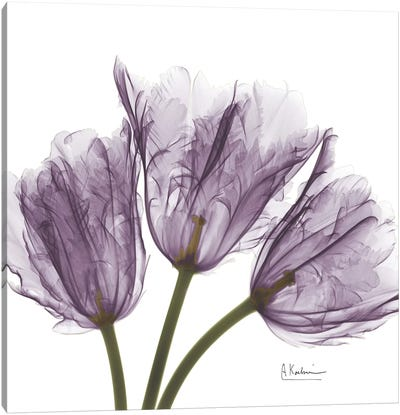 Tulips III Canvas Art Print