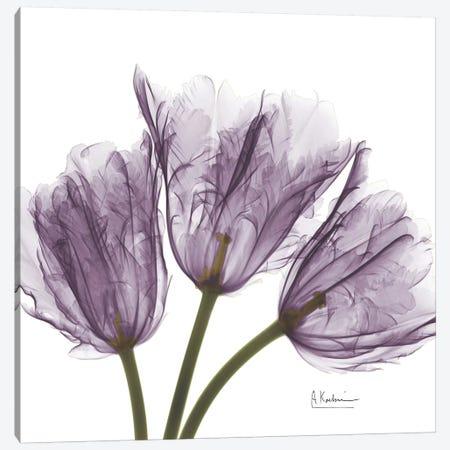 Tulips III Canvas Print #ALK75} by Albert Koetsier Canvas Art