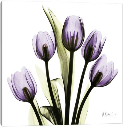 Tulips Imagine Canvas Art Print