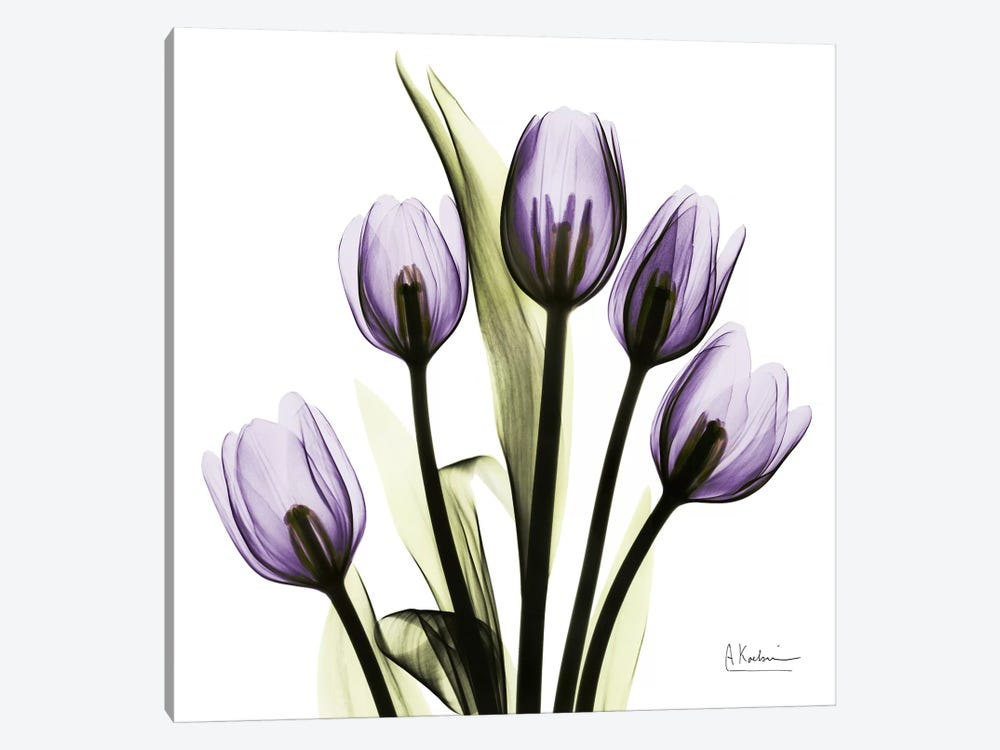 Tulips Imagine by Albert Koetsier 1-piece Canvas Print