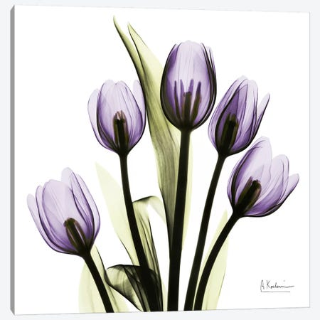Tulips Imagine Canvas Print #ALK76} by Albert Koetsier Canvas Artwork