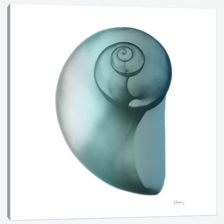 Water Snail II Canvas Print #ALK77} by Albert Koetsier Canvas Art