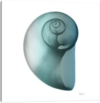 Water Snail II Canvas Art Print