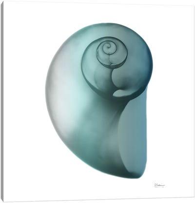 Water Snail II Canvas Art Print